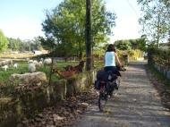 cicloturismo-outono-2016-dia-3-ecopista-do-dao-coimbra-057